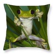 Gliding Leaf Frog Agalychnis Spurrelli Throw Pillow