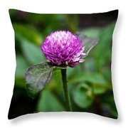 Globe Amaranth Bicolor Rose Throw Pillow