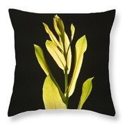 Glorious Willow Aglow Throw Pillow