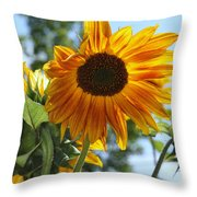 Glory Glory Sunflower Throw Pillow