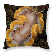 Glossodoris Cruenta Nudibranch, North Throw Pillow