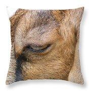 Goat Lashes Throw Pillow