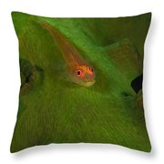 Goby On A Coral, Australia Throw Pillow