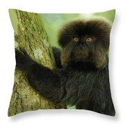 Goeldis Monkey Callimico Goeldii Throw Pillow