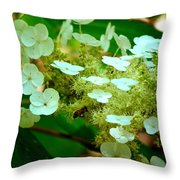 Going In For The Sweet Stuff Throw Pillow