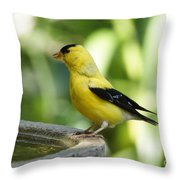Gold Finch At The Bird Bath Throw Pillow