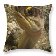 Gold-speck Jawfish Pouting, North Throw Pillow