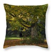 Golden Cappadocian Maple. Throw Pillow