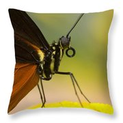 Golden Helicon On Flower Throw Pillow