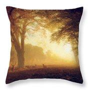 Golden Light Of California Throw Pillow