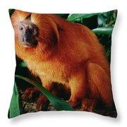 Golden Lion Tamarin Leontopithecus Throw Pillow