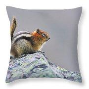 Golden-mantled Ground-squirrel Throw Pillow