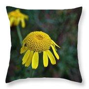 Golden Margurite Throw Pillow