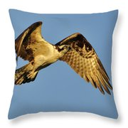 Golden Osprey In Dawn's Early Light Throw Pillow