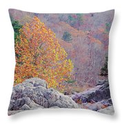 Golden Poplar Among The Rocks At Johnsons Shut Ins State Park Throw Pillow
