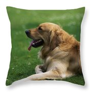 Golden Retriever Dog Laying In The Grass Throw Pillow
