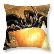 Golden Seashell Crab Still Life Throw Pillow