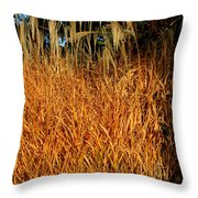 Golden Silver Grass Throw Pillow