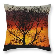 Golden Sunset Over Circle B Bar Sandstone Throw Pillow