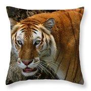 Golden Tabby Bengal Tiger Throw Pillow