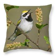 Golden-winged Warbler Vermivora Throw Pillow