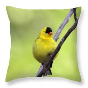 Goldfinch - All Puffed Up Throw Pillow