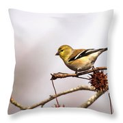 Goldfinch In Sweetgum Throw Pillow