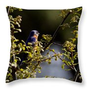 Good Morning Sunshine - Eastern Bluebird Throw Pillow