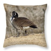 Goose With Head Cocked  Throw Pillow