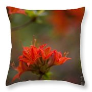Gorgeous Cluster Throw Pillow