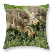 Goslings 1 Throw Pillow