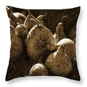 Gourds In Sepia Throw Pillow