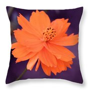 Grape Creamsicle Throw Pillow