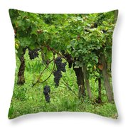 Grape Vines And Roses I Throw Pillow