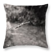 Grass Over Dirt Road Throw Pillow