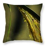Grass Plume Throw Pillow