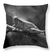 Grasshopper And Grunge In Black And White Throw Pillow