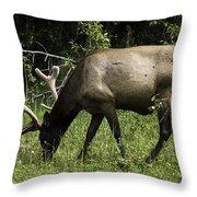 Grassland Grazing Throw Pillow