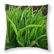 Grassy Drops Throw Pillow