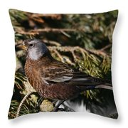Gray-crowned Rosy Finch Throw Pillow