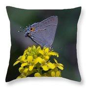 Gray Hairstreak Butterfly Din044 Throw Pillow