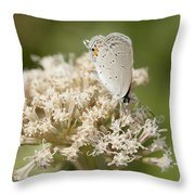 Gray Hairstreak Butterfly On Milkweed Wildflowers Throw Pillow