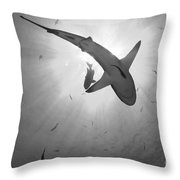 Gray Reef Shark, Kimbe Bay, Papua New Throw Pillow