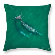 Gray Whale Mother And One-year-old Calf Throw Pillow