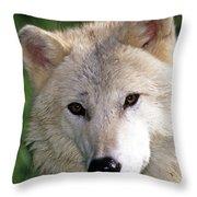 Gray Wolf Face Throw Pillow
