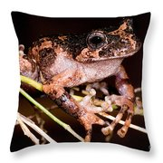 Gray Wood Frog Throw Pillow
