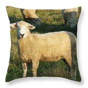 Grazing Sheep. Throw Pillow