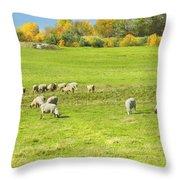 Grazing Sheep On Farm In Autumn Maine Throw Pillow
