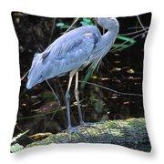 Great Blue Heron, Florida Throw Pillow