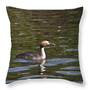 Great Crested Grebe With Breakfast Throw Pillow